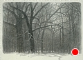 Woods in Winter by Tom Heflin Charcoal ~ 20 x 26