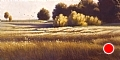 october fields by Tom Heflin Oil ~ 12 x 24