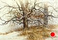 oaks in winter by Tom Heflin Acrylic on Crushed Paper ~ 24 x 30