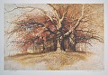 october oaks by Tom Heflin lithograph print ~ 16 x 24