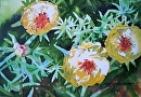 Yellow Primrose by Kristi Grussendorf Watercolor ~ 7 x 10