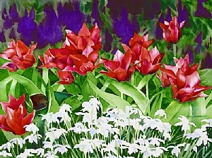 """Grape Hyacinth, Tulips & Snowdrops"" by Kristi Grussendorf Watercolor ~ 18"" x 24"""