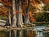 Cypress Bend by Greg Glowka