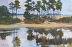 Coastal Pines by Jim Camann