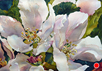 "Apple Blossoms by Yvonne Hemingway Watercolor ~ 11"" x 14"""
