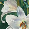 Easter Lilies - Original Watercolor Painting