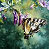 Swallow Tail and Petunias - Original Watercolor Painting