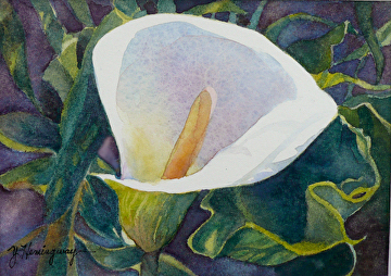 """White Calla Lily by Yvonne Hemingway Watercolor ~ 8"""" x 10"""" Framed"""