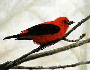 "Scarlet Tanager by Wes Hyde Oil ~ 7.25"" x 9.25"""