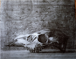Skull by Bill Murphy Charcoal ~ 22 x 17