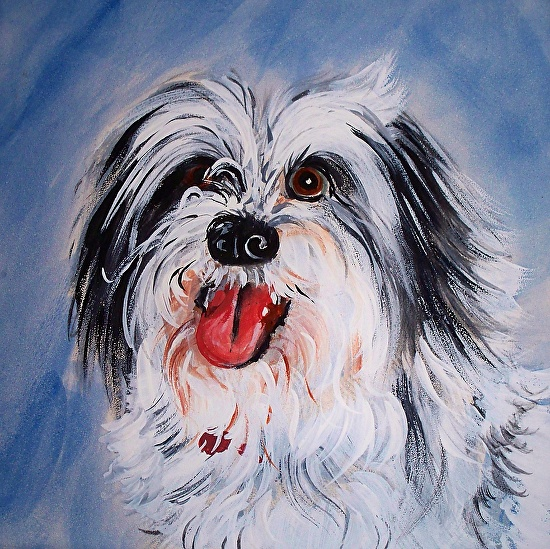 Sambo / Pet Portrait Example - Acrylic