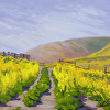 Through the Mustard, Pismo Preserve