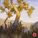 Sundown Sycamore by Jim Wodark Oil ~ 10 x 10