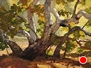 Sycamore in Autumn by Jim Wodark Oil ~ 12 x 16