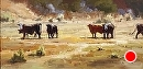 White Faced Cows by Jim Wodark Oil ~ 12 x 24