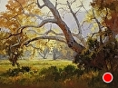 Fremont Sycamore by Jim Wodark Oil ~ 30 x 40