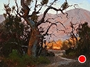 Sycamore Vista by Jim Wodark Oil ~ 12 x 16