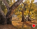 Old Sycamore Grove by Jim Wodark Oil ~ 14 x 18