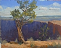 Desert View Pinyon by Chase Almond Oil ~ 11 x 14
