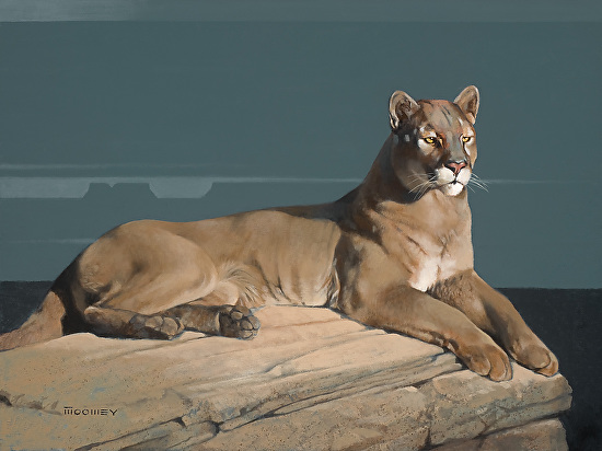 Arizona Sphinx - Oil