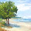 21 Tree-Shading-the-Beach 1-21-15