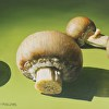 mushrooms on green table