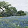 """Bluebonnet Hill II"""