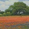"""""""Somerset Spring"""""""
