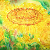 "Carolyn Hartley_ ""Sunflowers in the Light"""