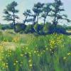 June Yellows