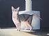 "Martha's Cat by Pat Quinn Oil ~ 18"" x 24"""