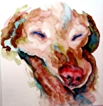 snooze by V Rae Watercolor ~  x