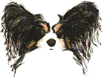 papillon by V Rae  ~  x