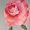 Camellia's Caress