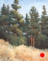 Grand Teton Pines by Virginia Carruth Pastel ~ 20 x 16