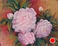 Pink Pastel by Virginia Carruth Pastel ~  x