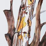 bonnie joy sedlak - 43rd international watercolor art society houston