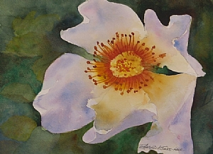 "Open Face Rose by Richmond Jones Watercolor ~ 9"" x 12"""