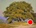 Lovely Tuscan Tree by Kami Mendlik Oil ~ 11 x 14