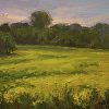 Wild Mustard Fields, Cool Light