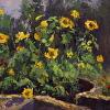 Sunflowers In Silo