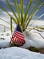 "Stars and Stripes in the Snow by Alan Wood Photograph ~ 14"" x 11"""