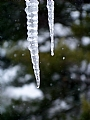 "2/15/2010 Snowy Icicles by Alan Wood Photograph ~ 14"" x 11"""