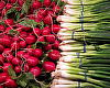 "Radishes and Green Onions by Alan Wood Photograph ~ 8"" x 10"""