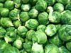 "Brussel Sprouts by Alan Wood Photograph ~ 8"" x 10"""