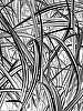 "Zebra Grass by Alan Wood Photograph ~ 14"" x 11"""