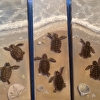 Little Loggerheads