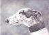 Greyhound Profile by Charlotte Yealey