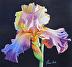 13-06 Iris in Sunlight by Tanis Bula