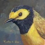 Timothy Joe - Hooded Warbler Gouache Demo
